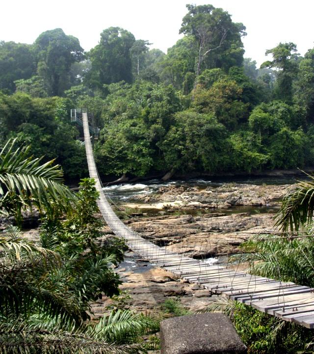 Bruecke über den Fluss - noch steht dieser Wald